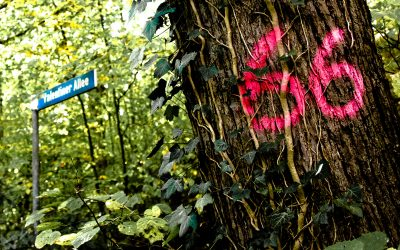 Waldstück am Flensburger Bahnhof weiterhin in akuter Gefahr!